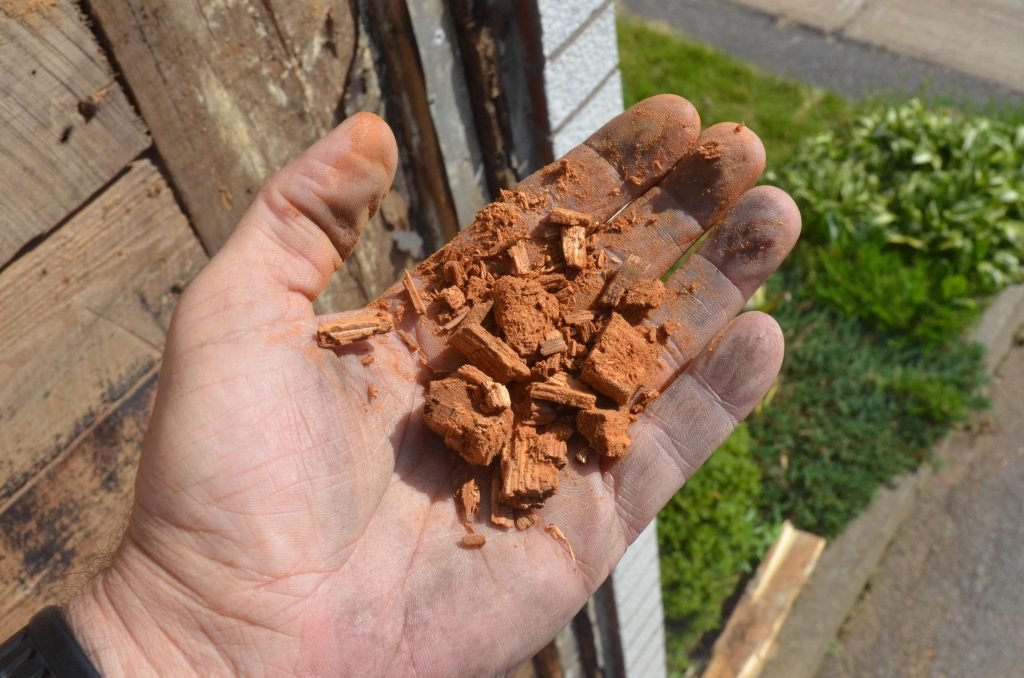 Pourriture cubique bois de charpente décomposé-BEBEXPERTS