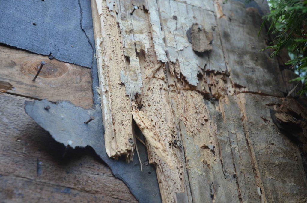 Inspection vice caché, fourmis charpentières BEBEXPERTS