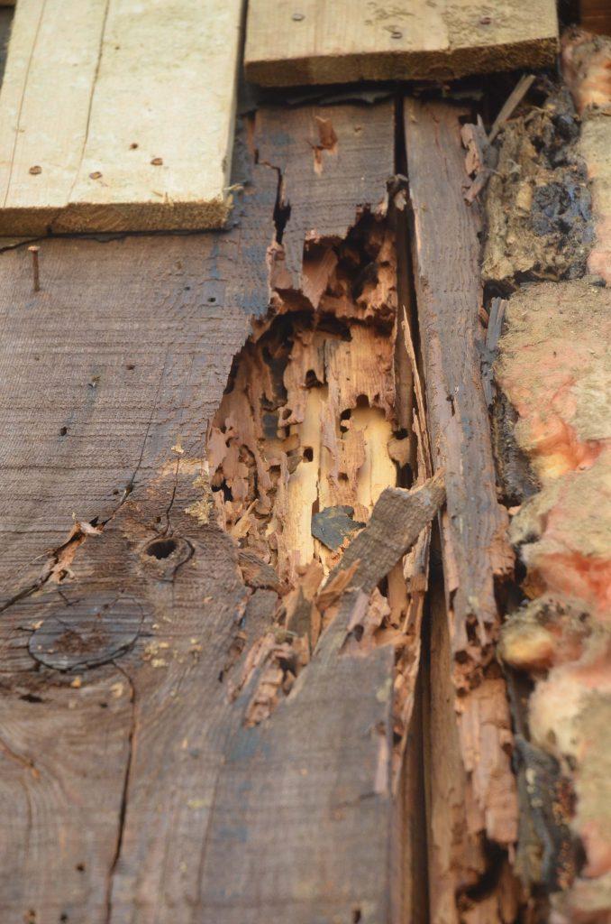 Vice de structure en bois d'une maison endommagé par les fourmis charpentières.